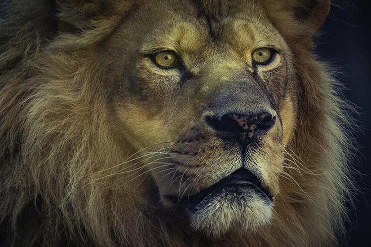 In der Höhle der Löwen | Companisto Blog