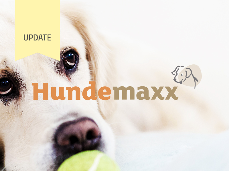 Hundemaxx Enters Final Campaign Stage and Talks about Milestones during the Campaign
