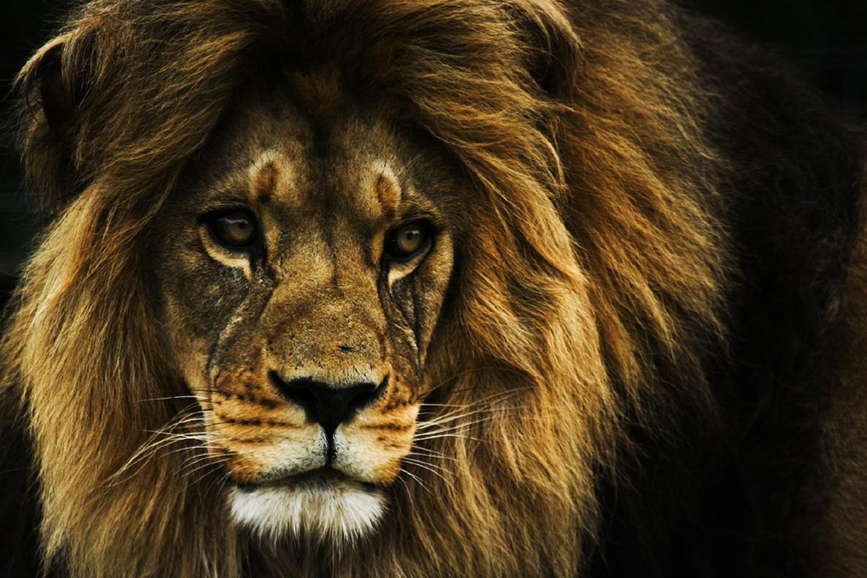 Die Höhle der Löwen startet heute | Companisto Blog