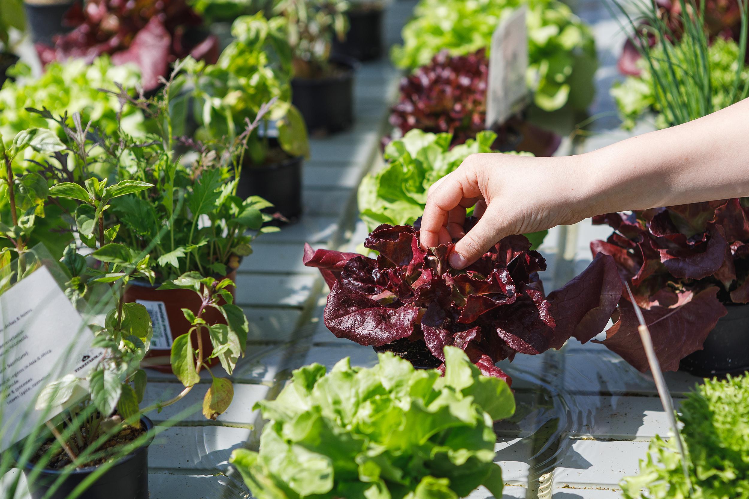 Urban Farming - Lebensmittel aus der Stadt für die Stadt