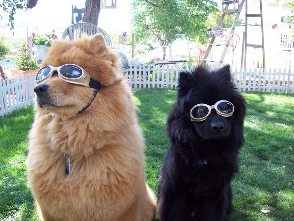 doggles / facebook