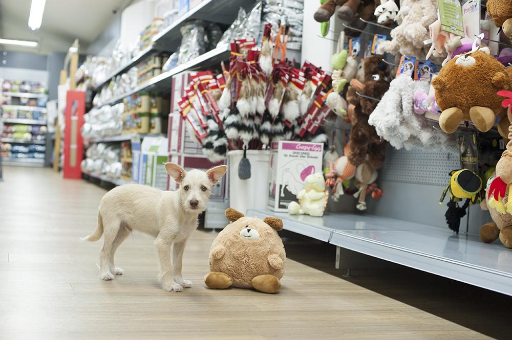 Hund in Hundemaxxfiliale