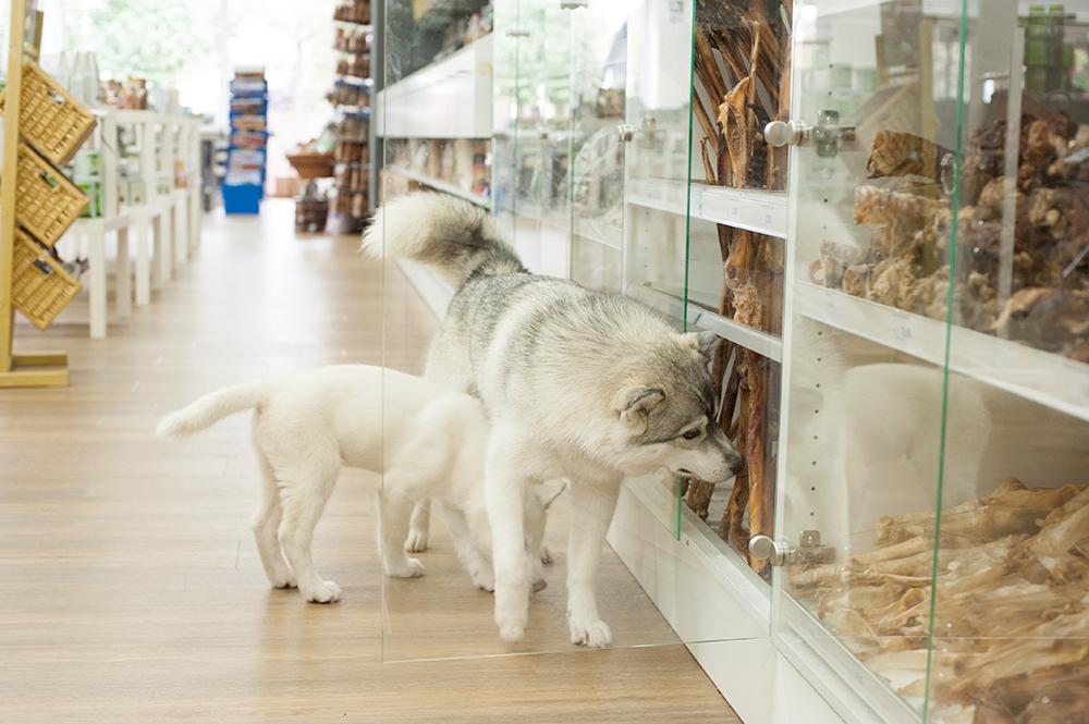 Hunde in einer Hundemaxxfiliale